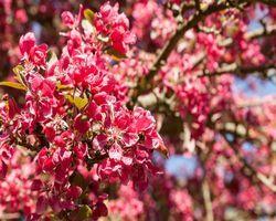 Цветущий кустариник/деревья