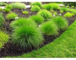 Декоративные травы и злаки