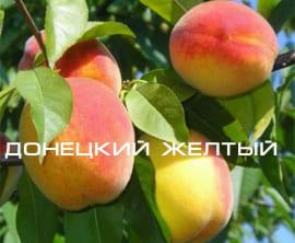 Персик Донецкий желтый